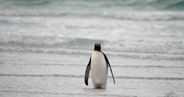 traveling during the best time to visit the Falkland Islands