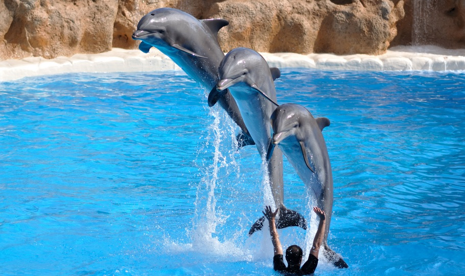 Loro Parque, with entertaining aquarium shows, are one of the best family attractions in Tenerife