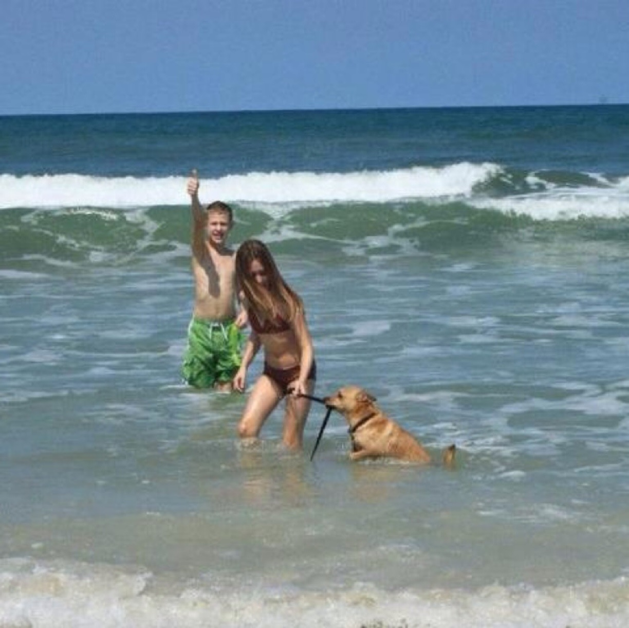 Read below to learn more about Daytona Beach for dogs